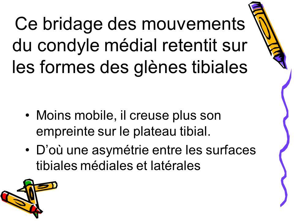 Ce bridage des mouvements du condyle médial retentit sur les formes des glènes tibiales Moins mobile, il creuse plus son empreinte sur le plateau tibial.