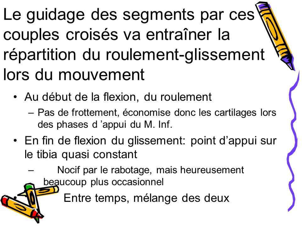 Le guidage des segments par ces couples croisés va entraîner la répartition du roulement-glissement lors du mouvement Au début de la flexion, du roulement –Pas de frottement, économise donc les cartilages lors des phases d appui du M.