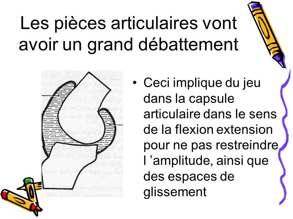 Les pièces articulaires vont avoir un grand débattement Ceci implique du jeu dans la capsule articulaire dans le sens de la flexion extension pour ne pas restreindre l amplitude, ainsi que des espaces de glissement