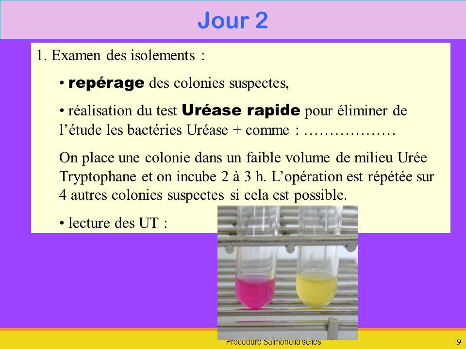 Procédure Salmonella selles9 Jour 2 1. Examen des isolements : repérage des colonies suspectes, réalisation du test Uréase rapide pour éliminer de lét