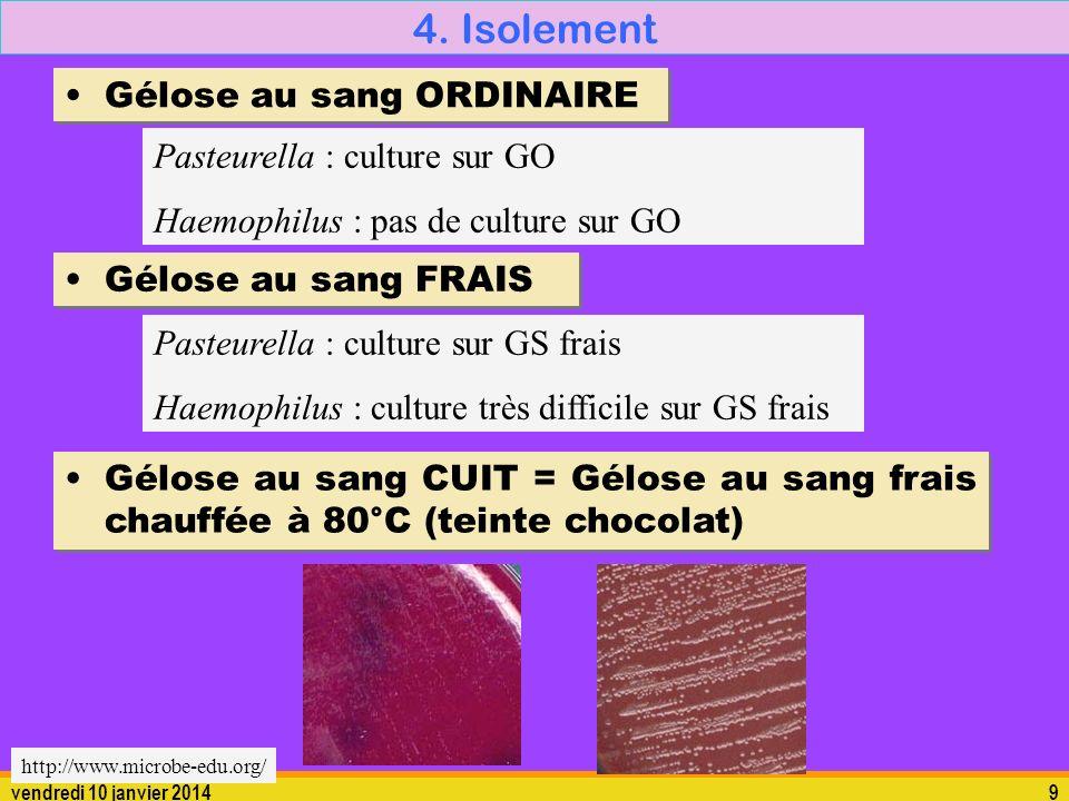 vendredi 10 janvier 20149 4. Isolement Gélose au sang FRAIS Pasteurella : culture sur GS frais Haemophilus : culture très difficile sur GS frais Gélos
