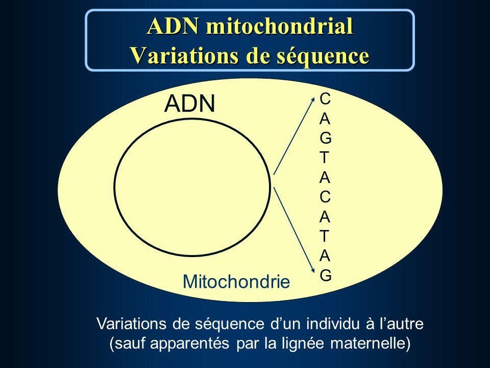 ADN mitochondrial Variations de séquence Mitochondrie ADN CAGTACATAGCAGTACATAG Variations de séquence dun individu à lautre (sauf apparentés par la lignée maternelle)