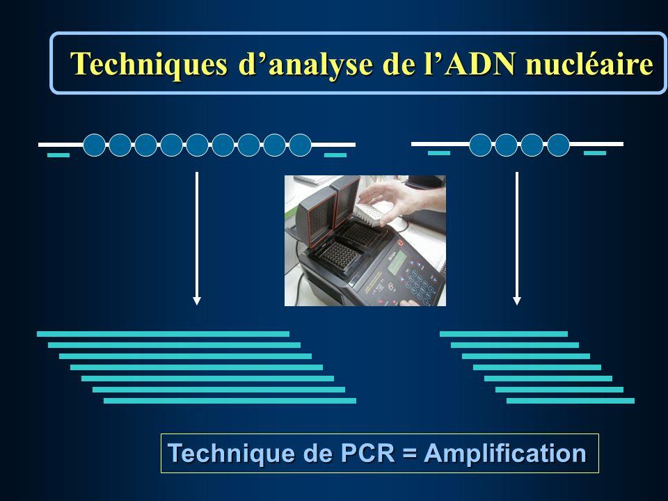 Technique de PCR = Amplification Techniques danalyse de lADN nucléaire