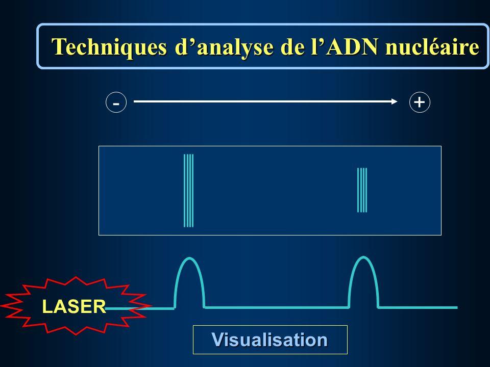 - + LASER Visualisation Techniques danalyse de lADN nucléaire