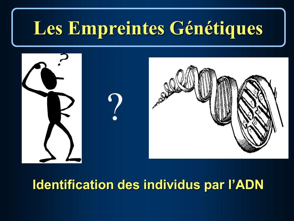 Identification des individus par lADN Les Empreintes Génétiques ?