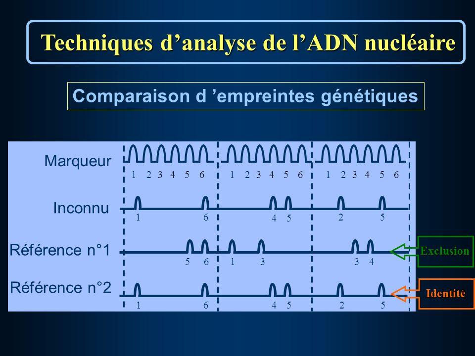 Comparaison d empreintes génétiques Marqueur 123456123456123456 16 45 25 Référence n°1 561334 Inconnu 164525 Référence n°2 Techniques danalyse de lADN nucléaire Exclusion Identité