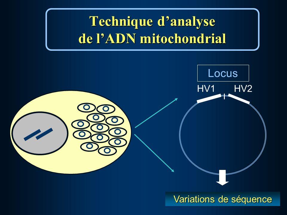 Technique danalyse de lADN mitochondrial HV1HV2 Locus Variations de séquence