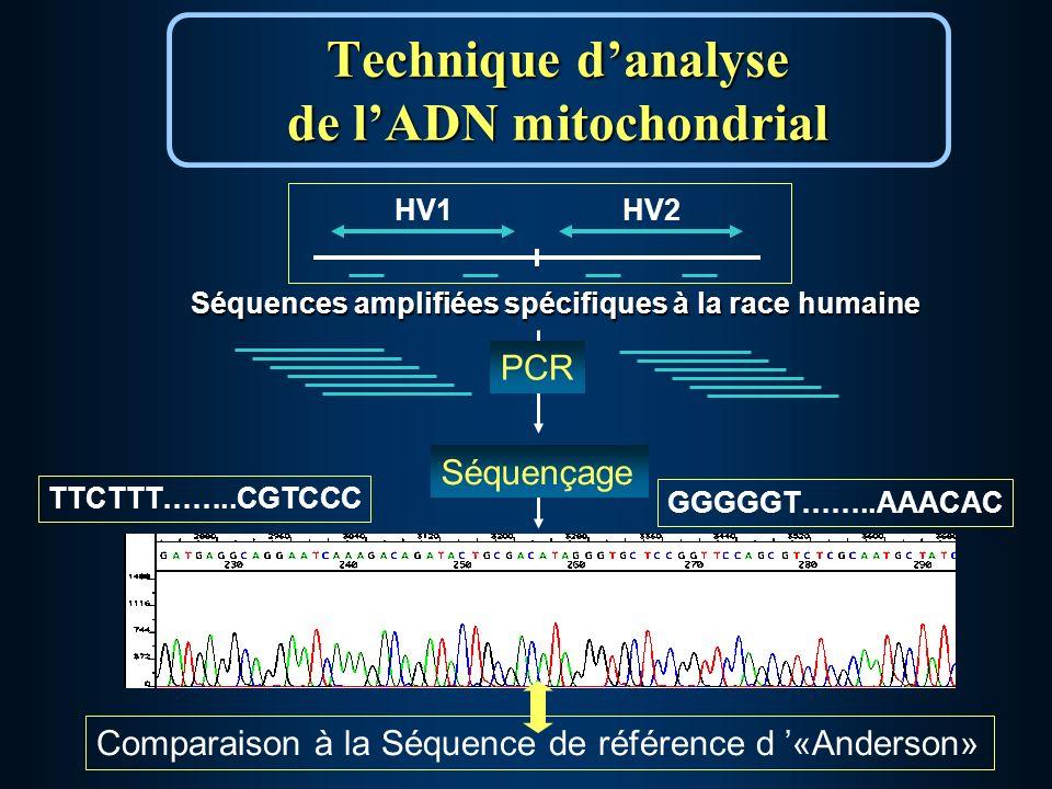 Séquences amplifiées spécifiques à la race humaine HV1HV2 Technique danalyse de lADN mitochondrial Comparaison à la Séquence de référence d «Anderson» PCR TTCTTT……..CGTCCC GGGGGT……..AAACAC Séquençage