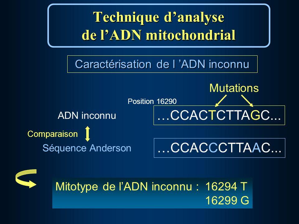 Caractérisation de l ADN inconnu Mutations …CCACTCTTAGC...