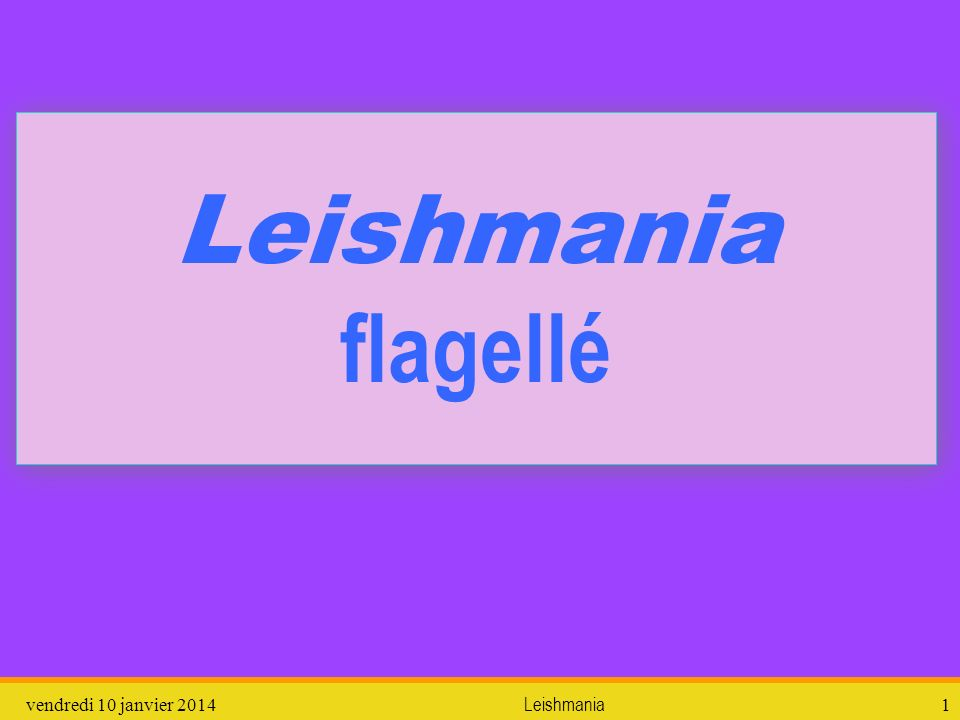 vendredi 10 janvier 2014Leishmania1 Leishmania flagellé