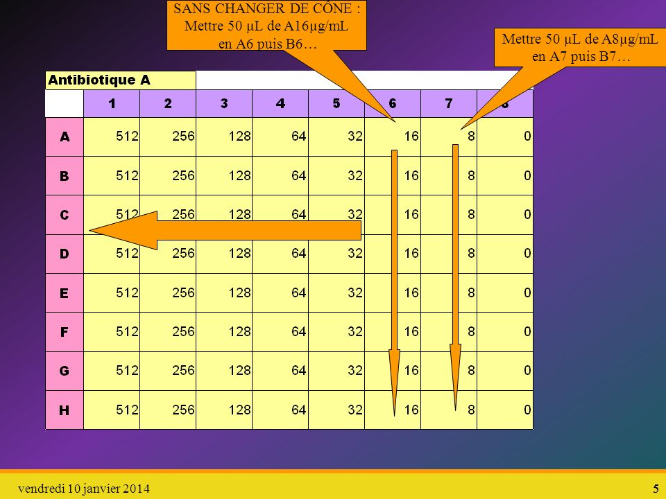 6 Mettre 50 µL de B 8µg/mL en G1 puis G2… SANS CHANGER DE CÔNE : Mettre 50 µL de B 16µg/mL en F1 puis F2…
