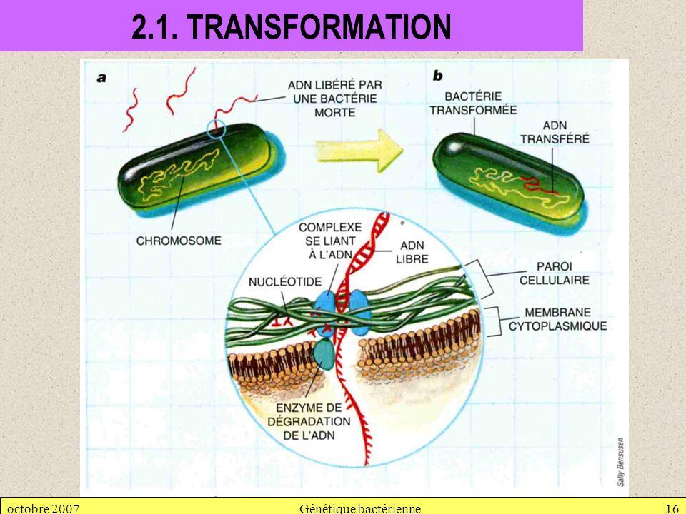 octobre 2007Génétique bactérienne16 2.1. TRANSFORMATION