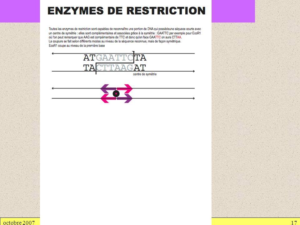 octobre 2007Génétique bactérienne17 2.1. TRANSFORMATION