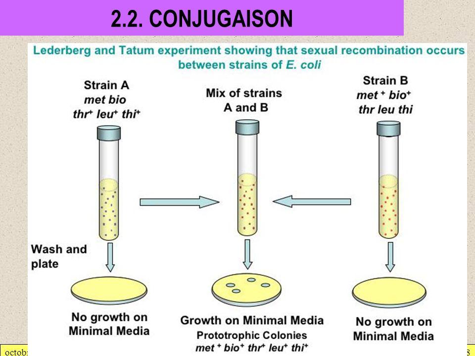 octobre 2007Génétique bactérienne18 2.2. CONJUGAISON
