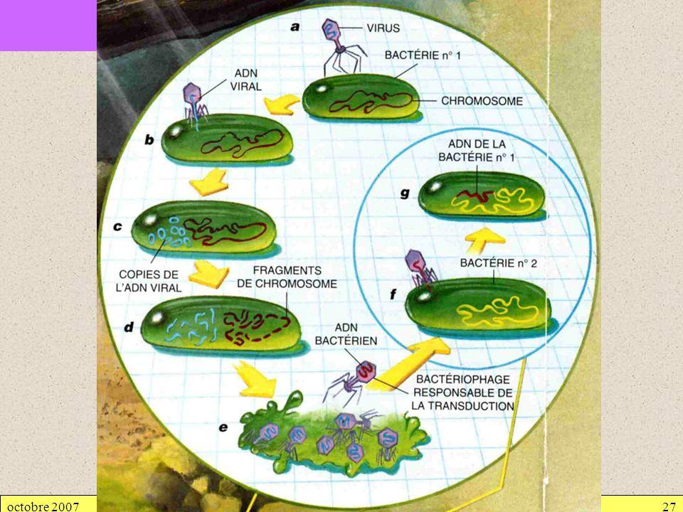 octobre 2007Génétique bactérienne27 2.3. TRANSDUCTION