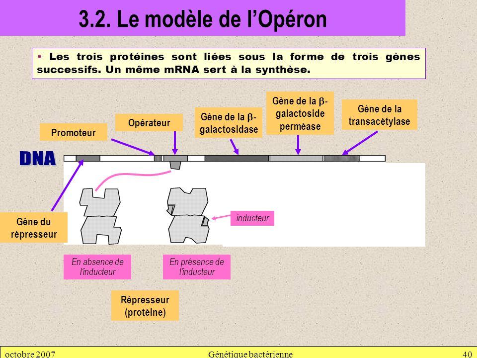 octobre 2007Génétique bactérienne40 3.2. Le modèle de lOpéron Les trois protéines sont liées sous la forme de trois gènes successifs. Un même mRNA ser