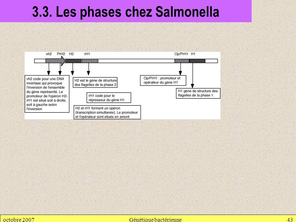 octobre 2007Génétique bactérienne43 3.3. Les phases chez Salmonella