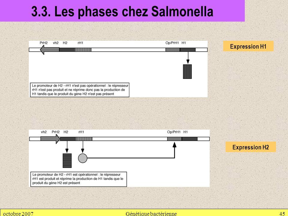 octobre 2007Génétique bactérienne45 3.3. Les phases chez Salmonella Expression H1 Expression H2