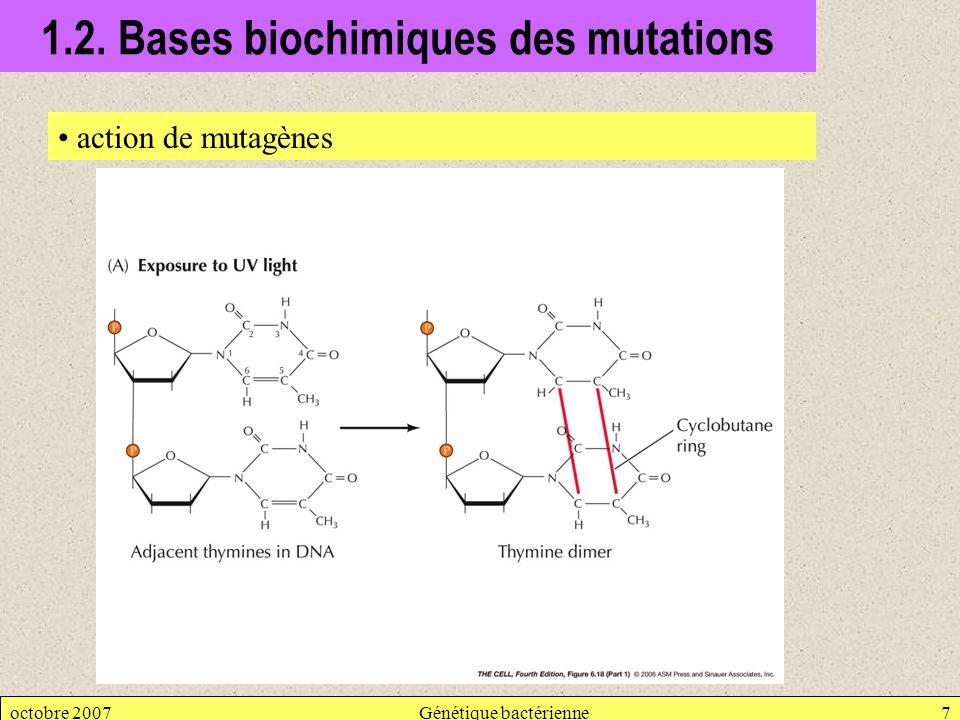 octobre 2007Génétique bactérienne7 1.2. Bases biochimiques des mutations action de mutagènes