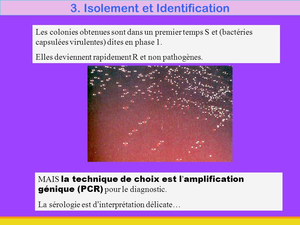 3. Isolement et Identification MAIS la technique de choix est lamplification génique (PCR) pour le diagnostic. La sérologie est dinterprétation délica
