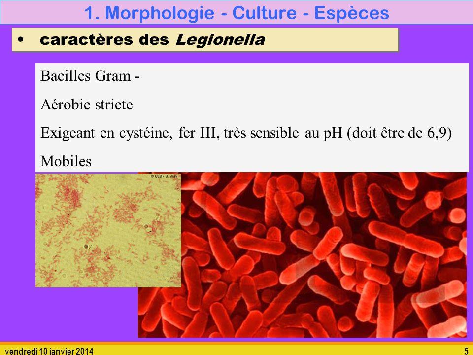 vendredi 10 janvier 20145 1. Morphologie - Culture - Espèces caractères des Legionella Bacilles Gram - Aérobie stricte Exigeant en cystéine, fer III,