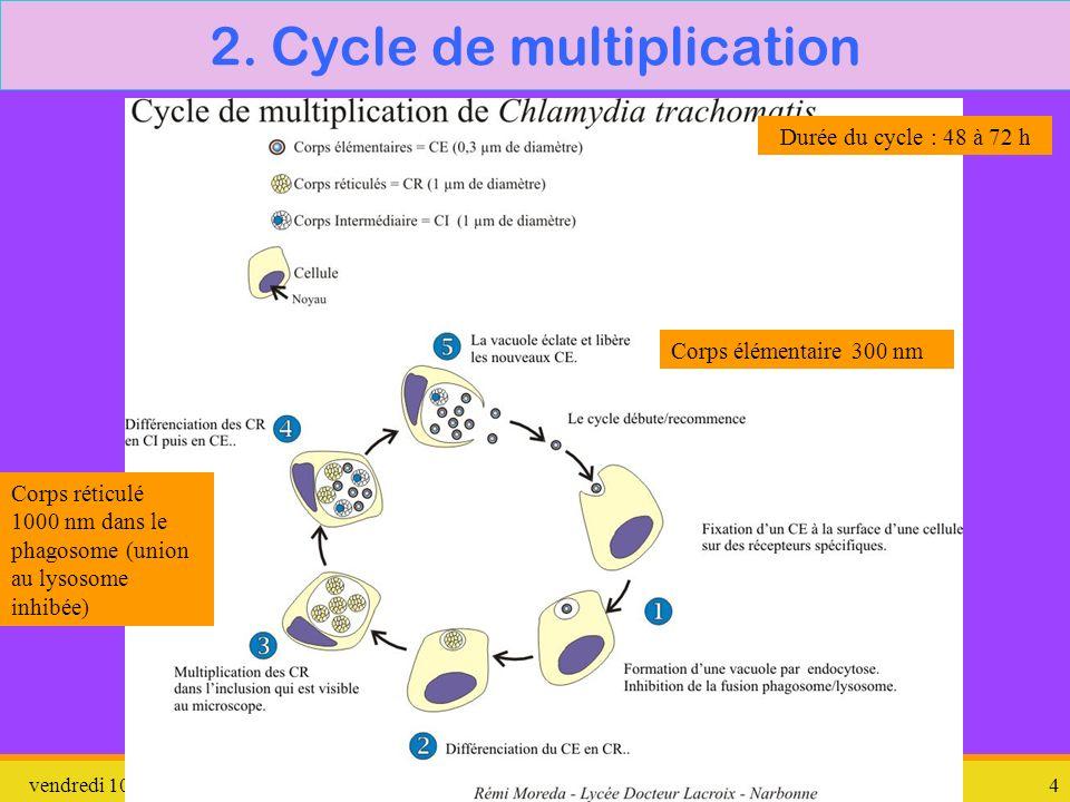 vendredi 10 janvier 2014Chlamydiae4 2. Cycle de multiplication Corps élémentaire 300 nm Corps réticulé 1000 nm dans le phagosome (union au lysosome in