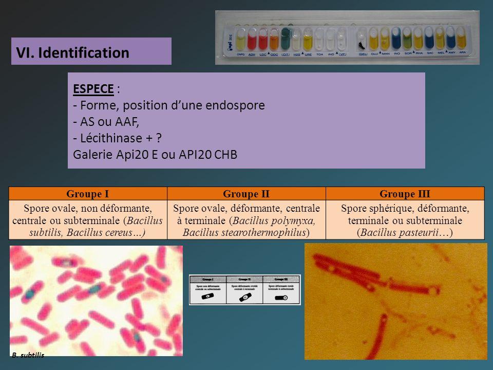 VI. Identification ESPECE : - Forme, position dune endospore - AS ou AAF, - Lécithinase + .