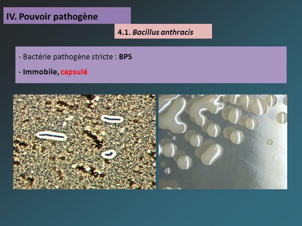 IV. Pouvoir pathogène - Bactérie pathogène stricte : BPS - Immobile, capsulé 4.1.