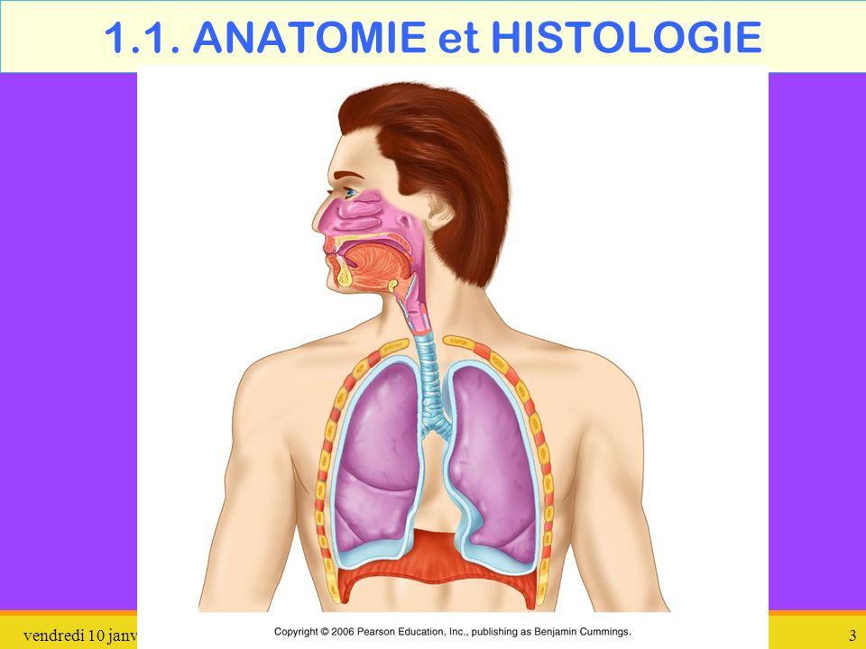 vendredi 10 janvier 2014 pathologie 4 Nez-Bouche-Pharynx langue fosses nasales luette épiglotte oesophage Trachée artère larynx pharynx amygdales