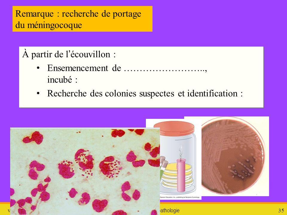 vendredi 10 janvier 2014 pathologie 36 3. LES INFECTIONS « BASSES »