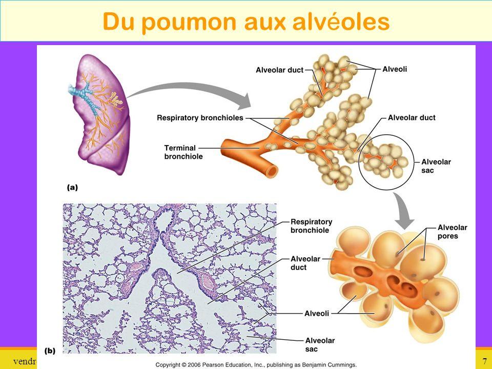 vendredi 10 janvier 2014 pathologie 8 Liens entre poumons et cage thoracique