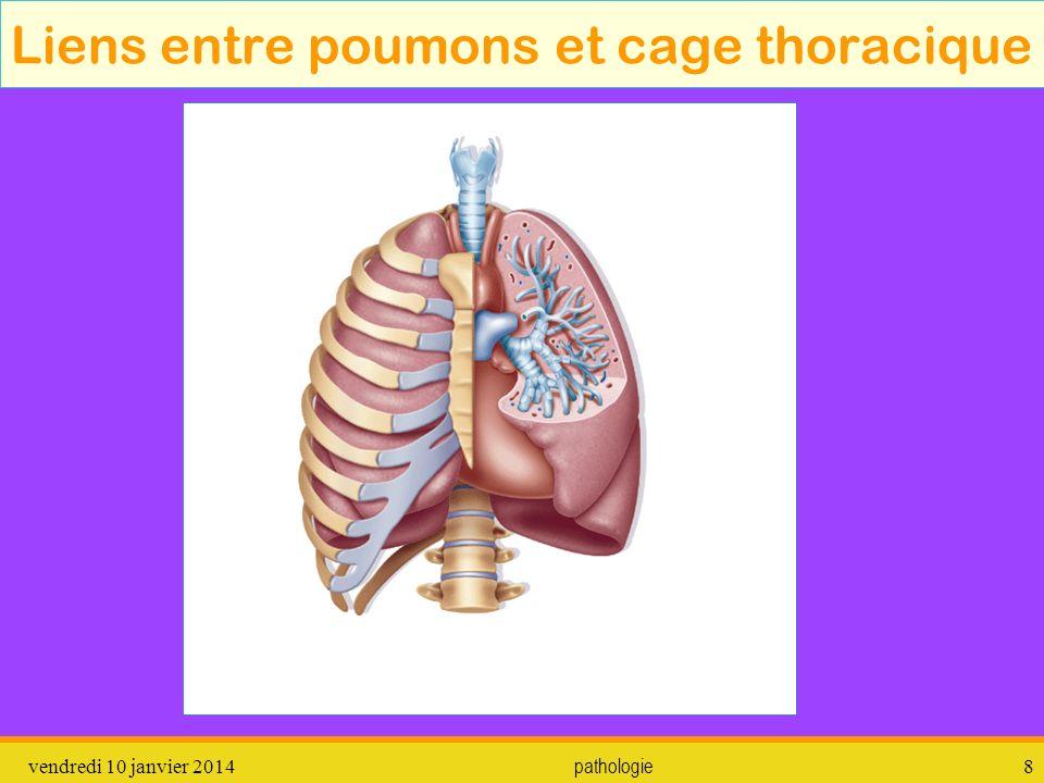 vendredi 10 janvier 2014 pathologie 9 Liens entre poumons et cage thoracique