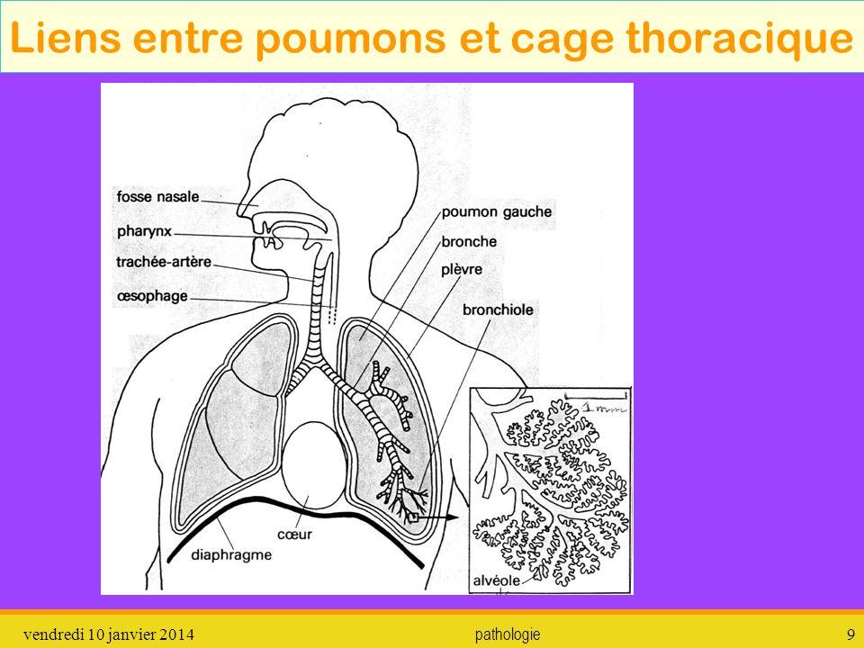 vendredi 10 janvier 2014 pathologie 10 Appareil respiratoire haut et bas Appareil respiratoire HAUT Appareil respiratoire BAS
