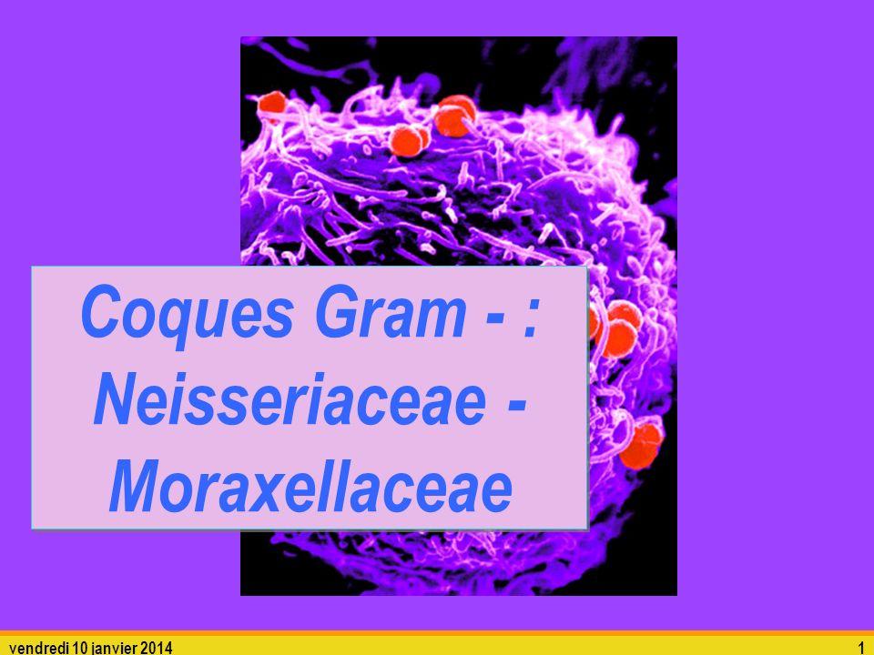 vendredi 10 janvier 20141 Coques Gram - : Neisseriaceae - Moraxellaceae