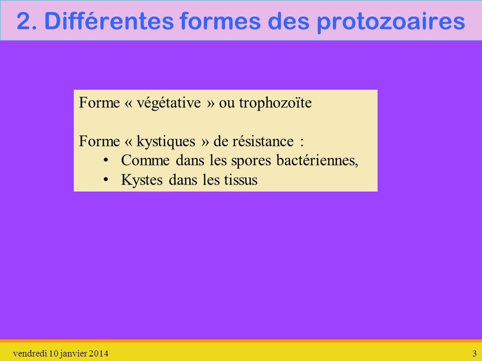 vendredi 10 janvier 20143 2. Différentes formes des protozoaires Forme « végétative » ou trophozoïte Forme « kystiques » de résistance : Comme dans le