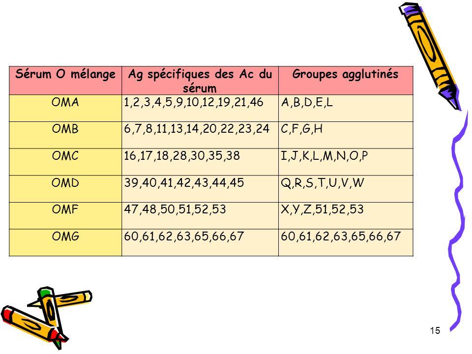 15 Sérum O mélangeAg spécifiques des Ac du sérum Groupes agglutinés OMA1,2,3,4,5,9,10,12,19,21,46A,B,D,E,L OMB6,7,8,11,13,14,20,22,23,24C,F,G,H OMC16,