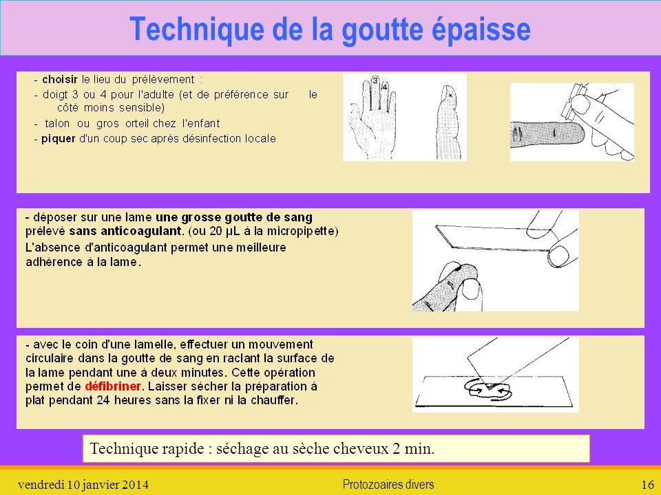 vendredi 10 janvier 2014Protozoaires divers16 Technique de la goutte épaisse Technique rapide : séchage au sèche cheveux 2 min.