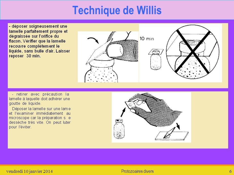 vendredi 10 janvier 2014Protozoaires divers6 Technique de Willis
