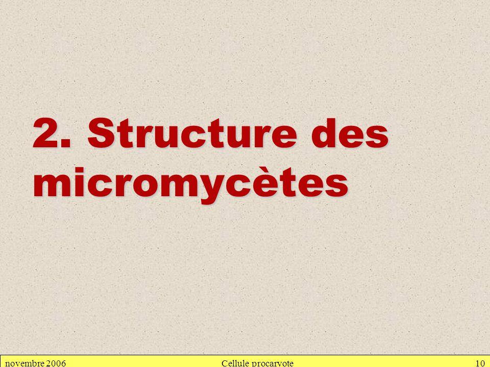 novembre 2006Cellule procaryote10 2. Structure des micromycètes