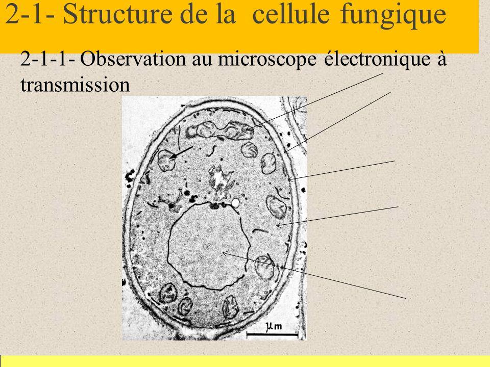 2-1- Structure de la cellule fungique 2-1-1- Observation au microscope électronique à transmission