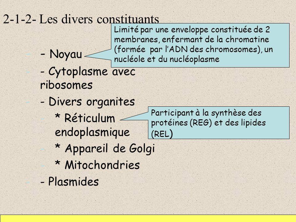 2-1-2- Les divers constituants -- Noyau -- Cytoplasme avec ribosomes -- Divers organites -* Réticulum endoplasmique -* Appareil de Golgi -* Mitochondr