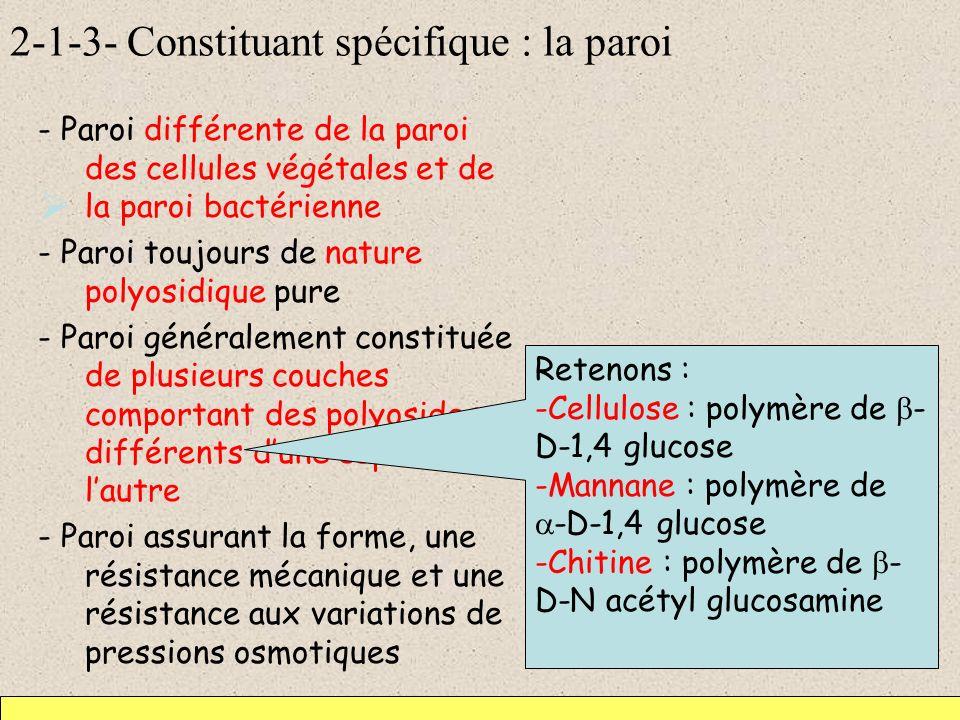 2-1-3- Constituant spécifique : la paroi - Paroi différente de la paroi des cellules végétales et de la paroi bactérienne - Paroi toujours de nature p