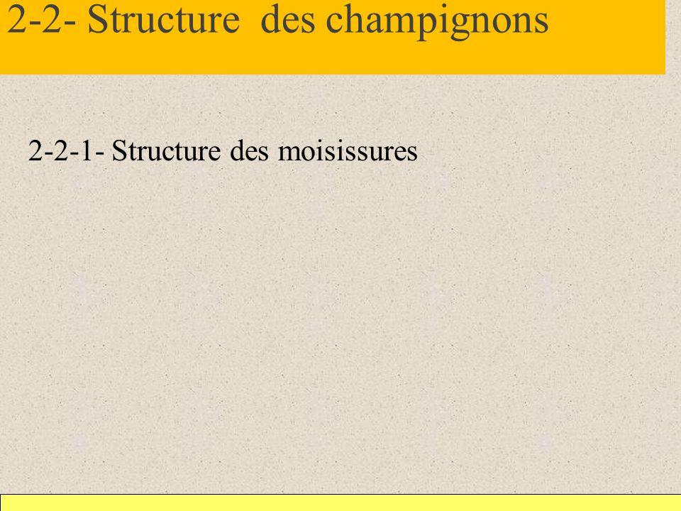 2-2- Structure des champignons 2-2-1- Structure des moisissures