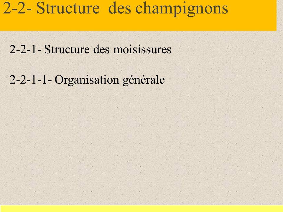 2-2- Structure des champignons 2-2-1- Structure des moisissures 2-2-1-1- Organisation générale