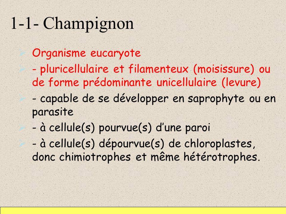 1-1- Champignon Organisme eucaryote - pluricellulaire et filamenteux (moisissure) ou de forme prédominante unicellulaire (levure) - capable de se déve