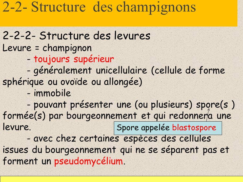 2-2- Structure des champignons 2-2-2- Structure des levures Levure = champignon - toujours supérieur - généralement unicellulaire (cellule de forme sp