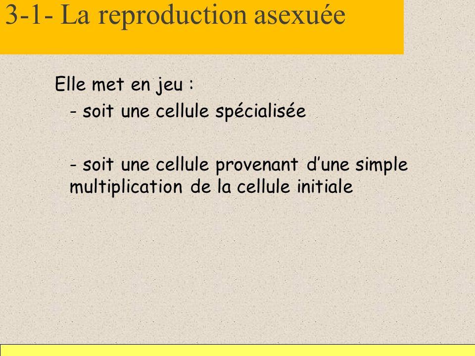3-1- La reproduction asexuée Elle met en jeu : - soit une cellule spécialisée - soit une cellule provenant dune simple multiplication de la cellule in