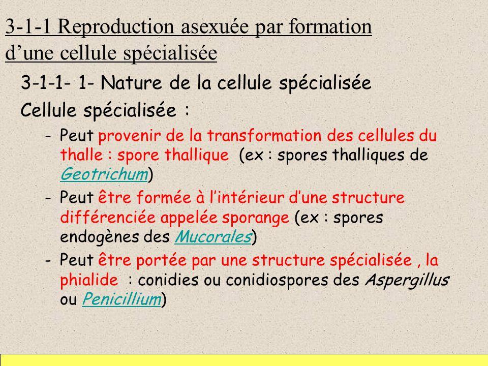 3-1-1 Reproduction asexuée par formation dune cellule spécialisée 3-1-1- 1- Nature de la cellule spécialisée Cellule spécialisée : -Peut provenir de l