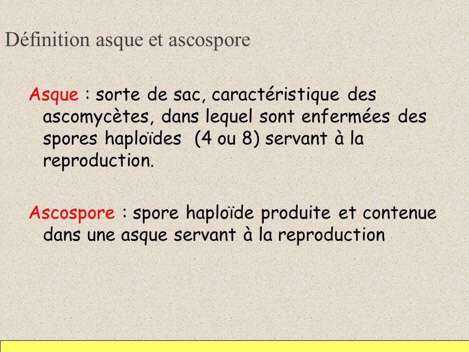 Définition asque et ascospore Asque : sorte de sac, caractéristique des ascomycètes, dans lequel sont enfermées des spores haploïdes (4 ou 8) servant