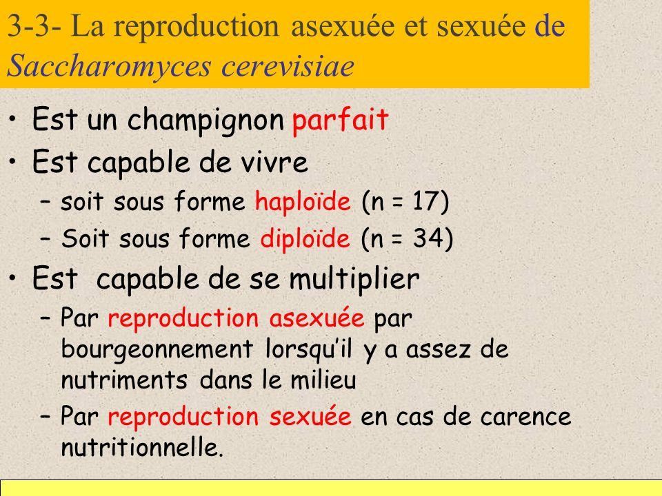 3-3- La reproduction asexuée et sexuée de Saccharomyces cerevisiae Est un champignon parfait Est capable de vivre –soit sous forme haploïde (n = 17) –